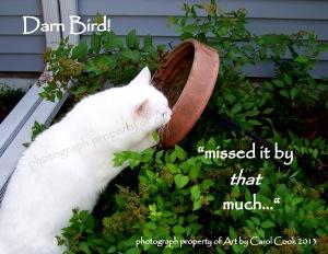 darn bird
